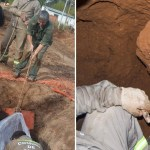 Empleados comunales encontraron un gliptodonte mientras hacían una obra