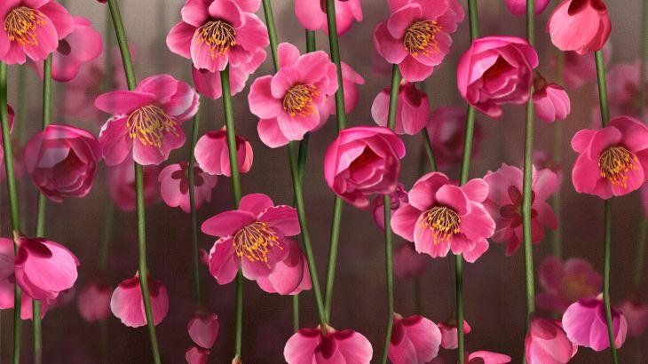 скачать широкоформатные обои на рабочий стол цветы № 294389 бесплатно