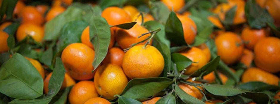 produce6