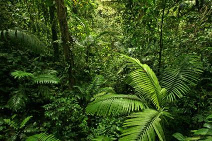 Rainforest Animals And Plants Rainforestfaunacom