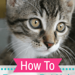 How To Remove Pet Hair With A Rubber Glove