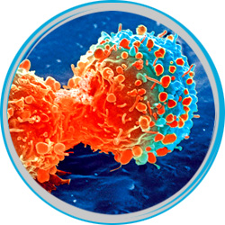 cancer_cells
