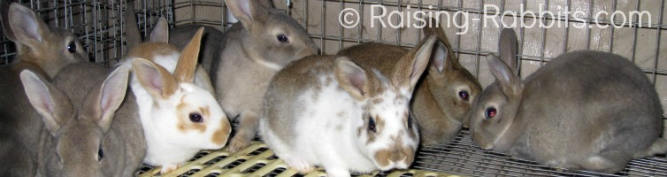Raising Baby Rabbits Healthy baby rabbit care to 10 weeks old