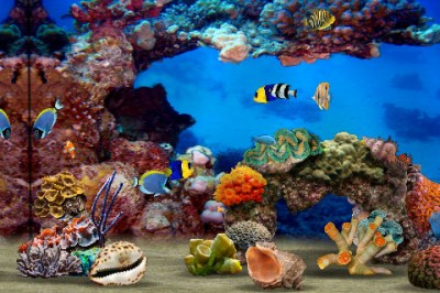 Powerpoint Templates Free Download: Moving Backgrounds Computer Fish