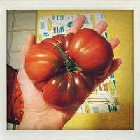 Tips for Growing Tomatoes in the Pacific Northwest