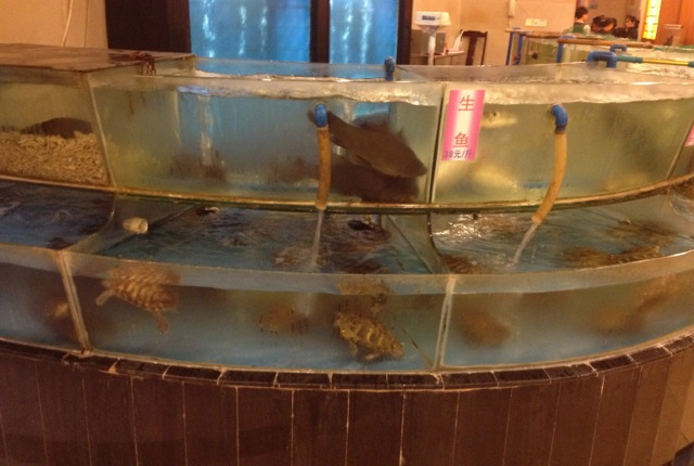 Fish tanks at restaurants