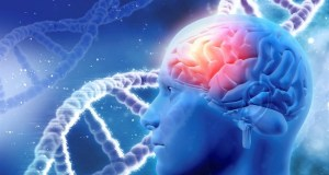 Tabula rasa brain genetics