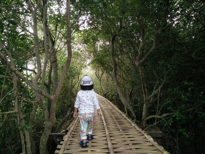 Hutan Mangrove, Kulon Progo
