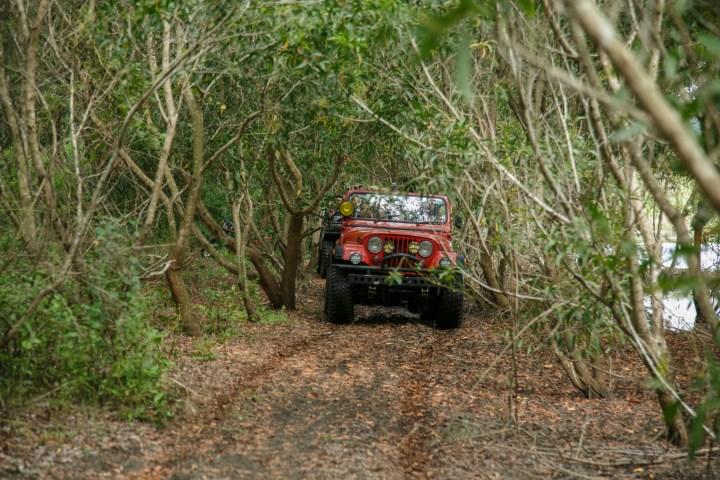 Sejumlah mobil jip menerobos lorong pepohonan di Parangtritis, Bantul, DI Yogyakarta (pic by: Hendra)