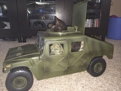 Commando cat!