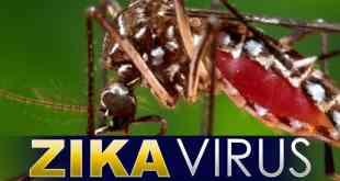 zika+virus7