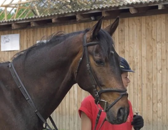 Horse Lease Agreement Horse Lease Agreement Format Sample Horse - sample horse lease agreement template