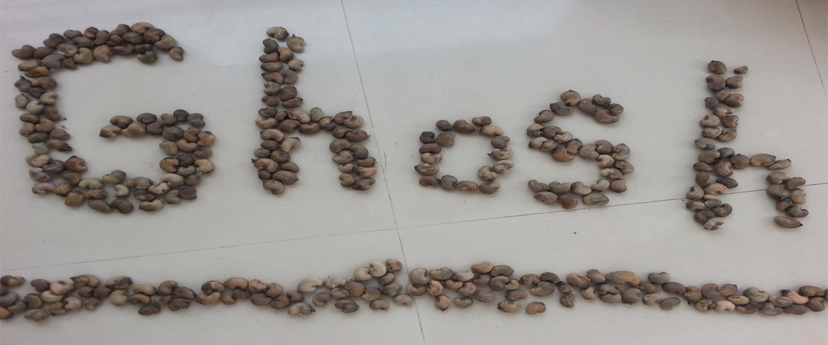 Benin origin raw cashewnuts africa