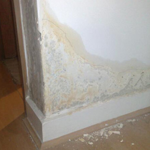 Black Mold Under Wallpaper Anti Condensation Paint Amp Anti Damp Product Guide