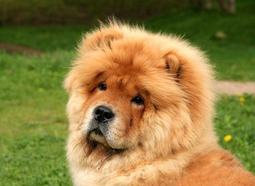 Medium Of Weird Dog Breeds