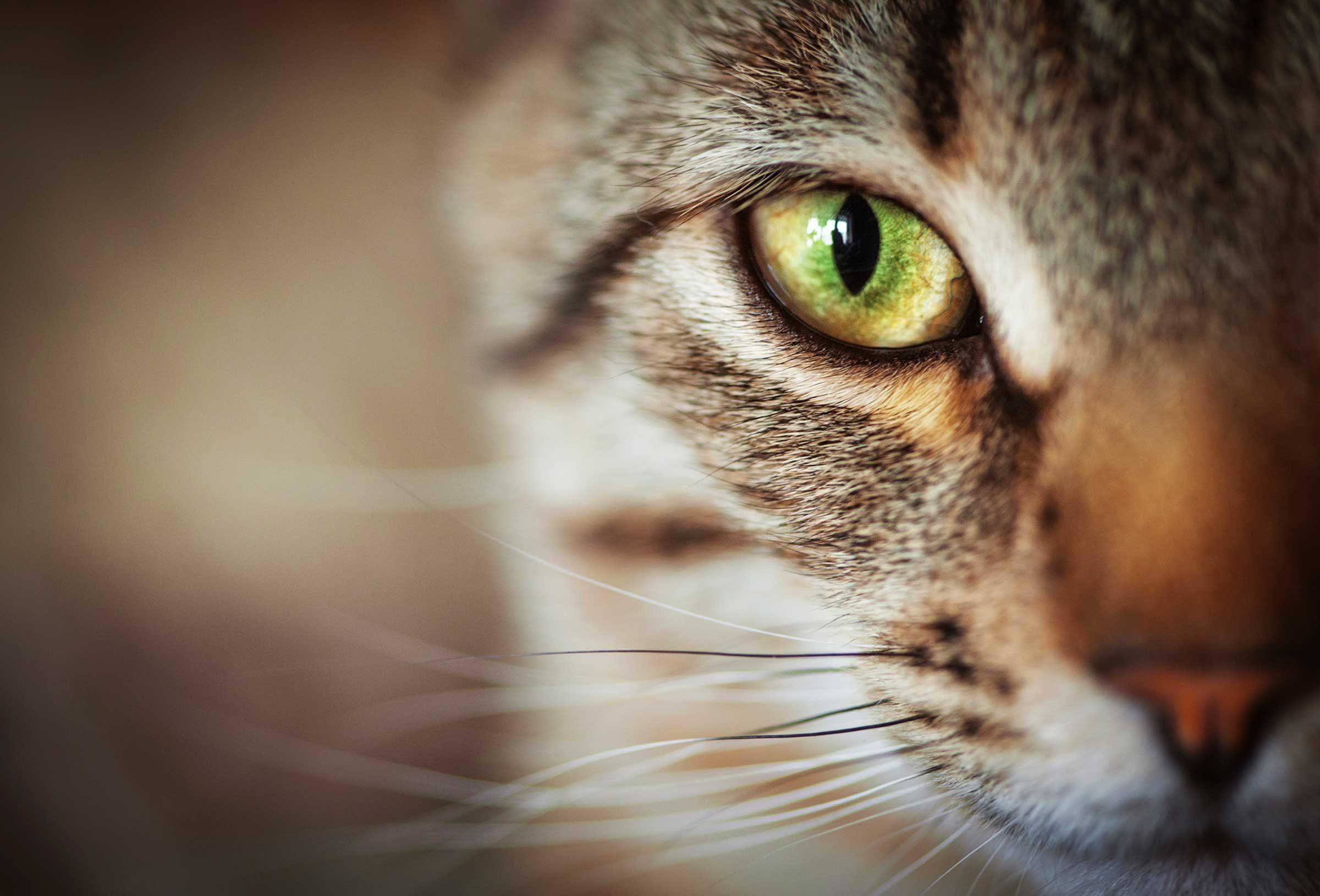 Cute Little Gray Cat For Wallpaper 50 Secrets Your Pet Won T Tell You Reader S Digest