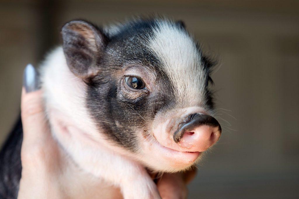 Smartest Animals 12 Species That Are Truly Genius Reader\u0027s Digest