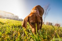 Unbelievable Facts You Never Knew About Your Pooch ...