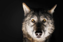 Small Of Female Wolf Names