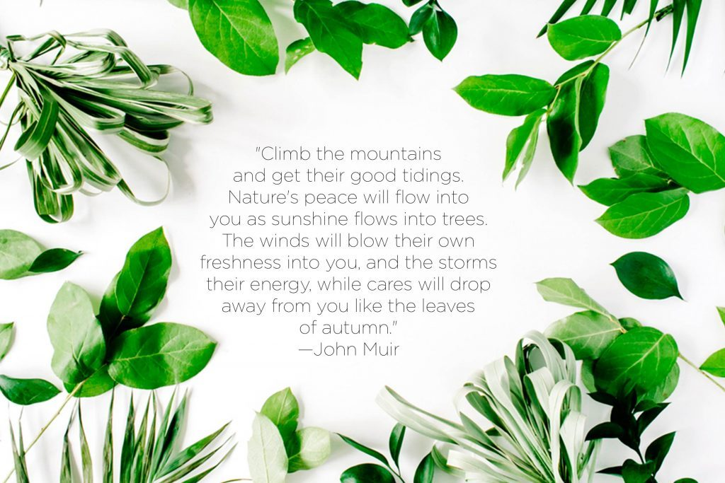 Drop Of Water Falling From A Leaf Dark Background Wallpaper Nature Quotes That Inspire Love Of The Earth Reader S Digest