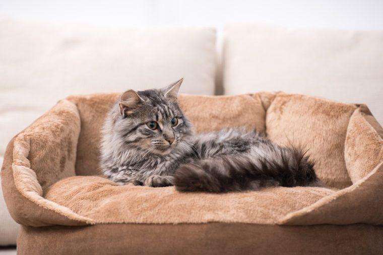 Best Pet Friendly Hotels In America Reader39s Digest