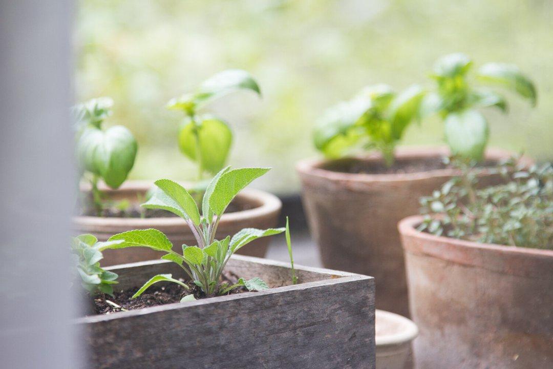 herbs_reading_my_tea_leaves_IMG_8851
