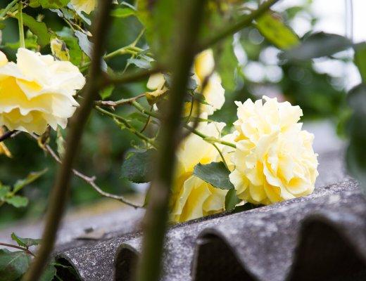 darling_rose_reading_my_tea_leaves_IMG_0760