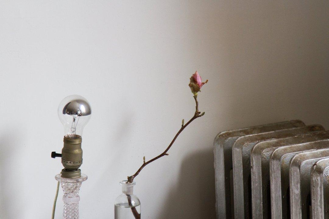 magnolia_bud_reading_my_tea_leaves_IMG_6832