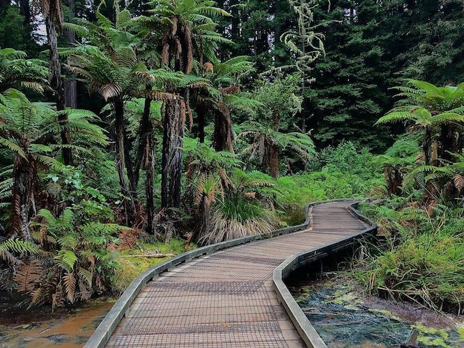 Rotorua Redwoods 2