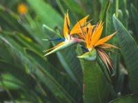 Tropical Garden Design Ideas To Inspire Your Outdoor Space ...