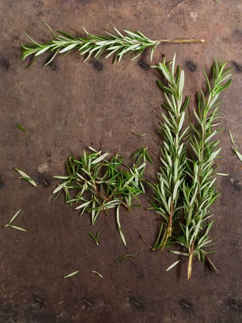 Medium Of How To Harvest Rosemary