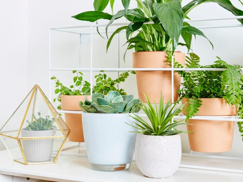 Large Of Creating An Indoor Garden