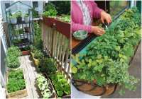 Apartment Patio Vegetable Gardens Pictures to Pin on ...
