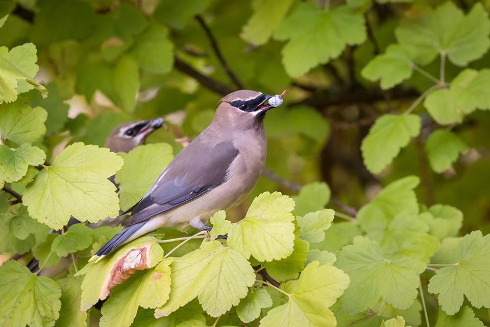 Atraer aves a su jardín de Sonoma County con estas plantas | La prensa demócrata -