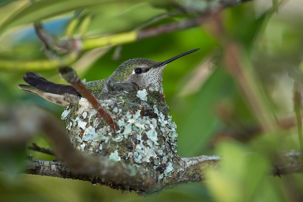Atraer a los colibríes