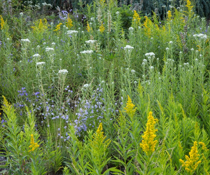 Late season pollinator plants