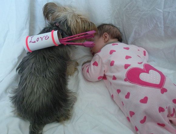 PETS: DIY Cupid pet costume