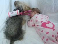 PETS: DIY Cupid pet costume