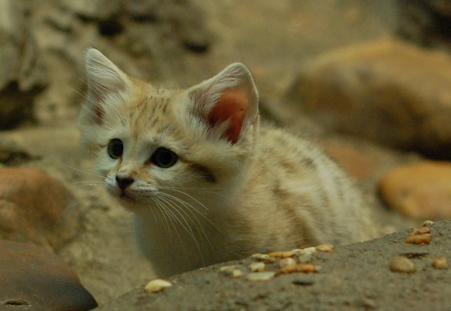 Proxecto Gato Really Cute Cats And Kittens