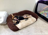 Percision Pet Couch Daydreamer Dog Bed - Real Mom Reviews