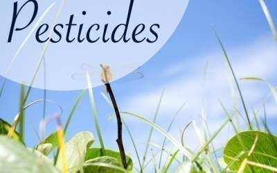 7 Homemade Organic Pesticides