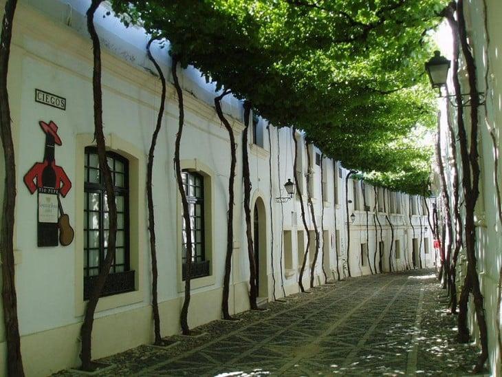 Tunel drzew na ulicy w Jerez, Hiszpania