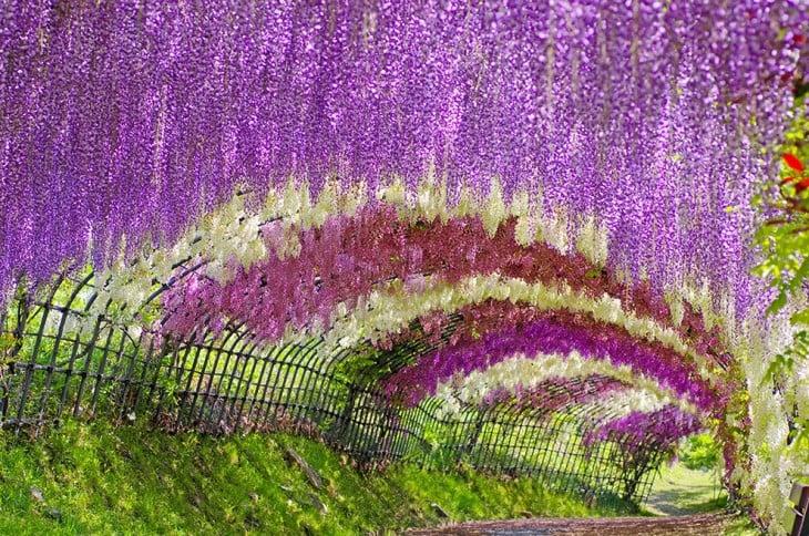 kwiat pokryte tunel w Japonii