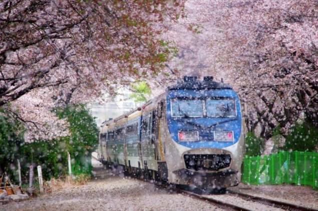 Jazda pierwszy obok wiśni tunelu kolejowego