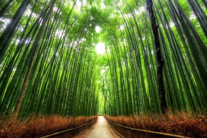 Bamboo Walk, Kioto, Japonia