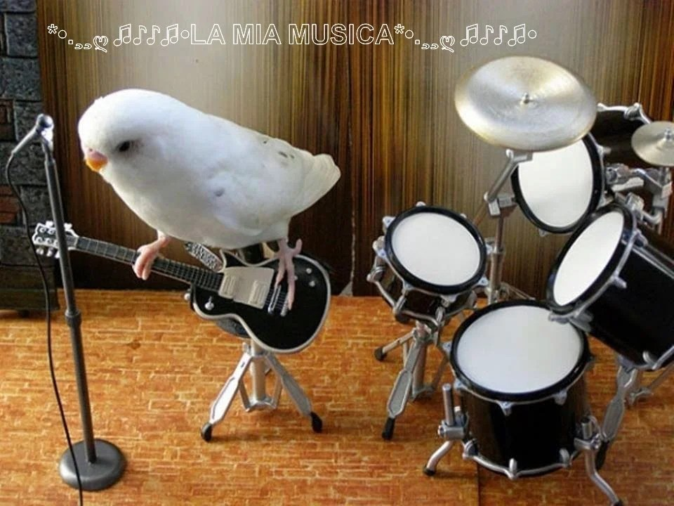 Cute Parakeet Wallpaper 30 Animales Graciosos Que Se Comportan Como Humanos