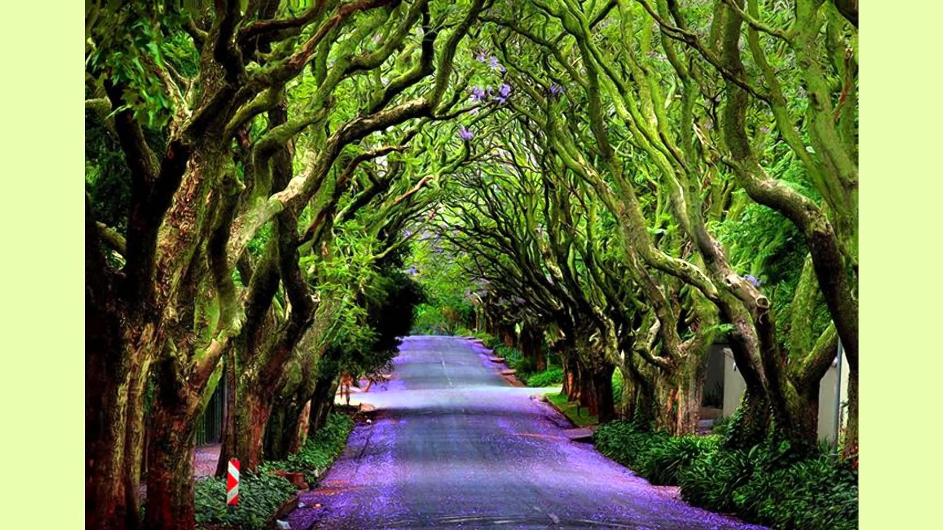 Wallpaper Primavera Hd Caminos M 225 Gicos En El Mundo Que Tienes Que Recorrer Caminando