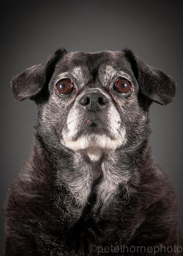 A Cute Puppy Wallpaper Fotografias De Perros Ancianos Que Nos Muestran Su Belleza