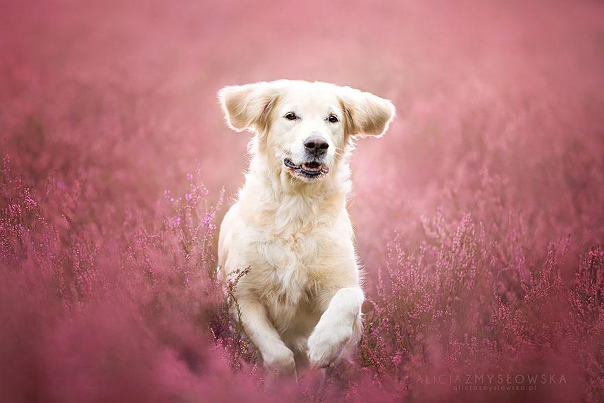 Cute Red Color Wallpaper Bella Sesi 243 N De Fotos Con Perros Como Modelos