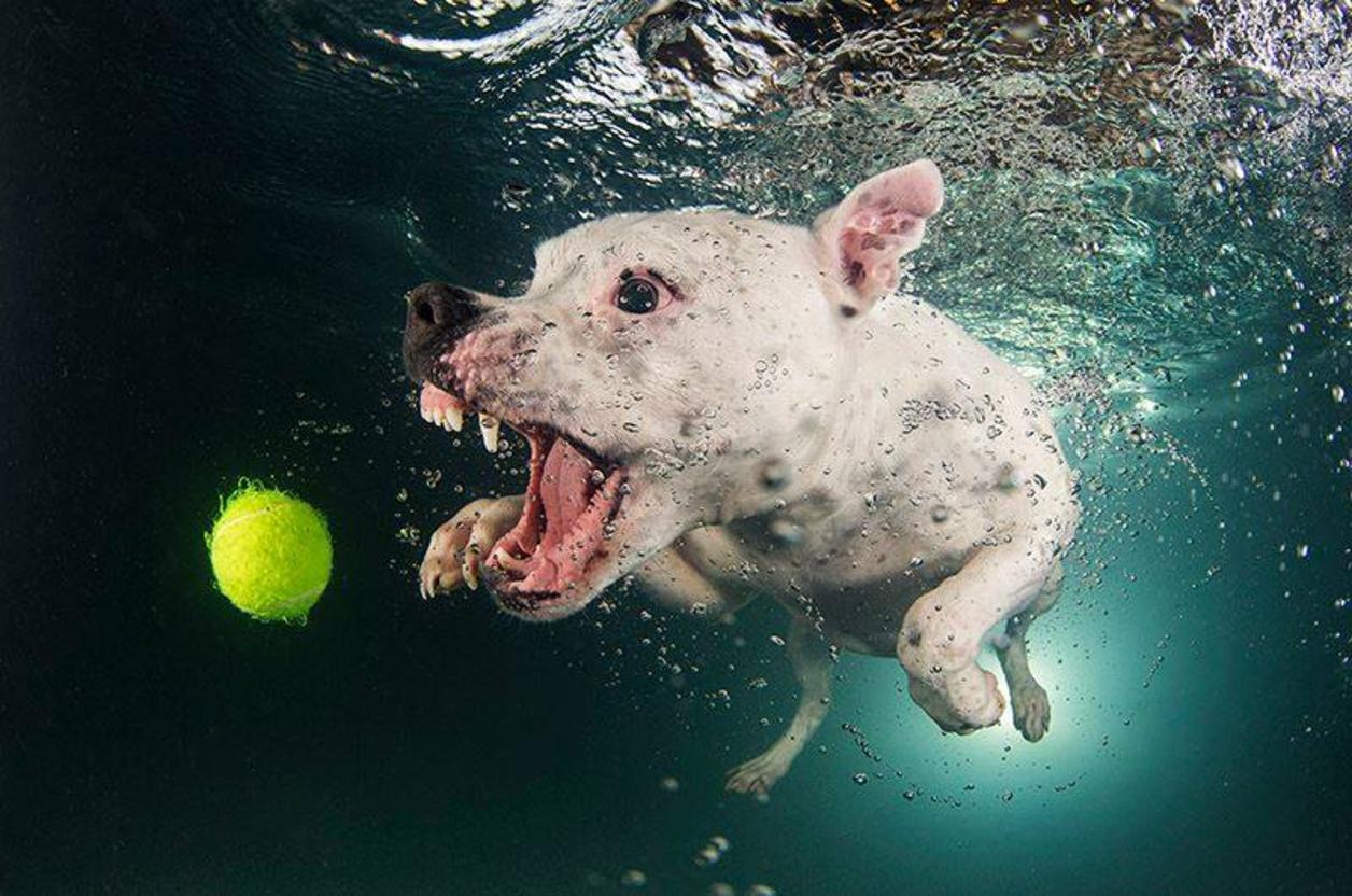 Cute Funny Puppies Wallpapers Fotos De Perros Debajo Del Agua Buscando Una Pelota